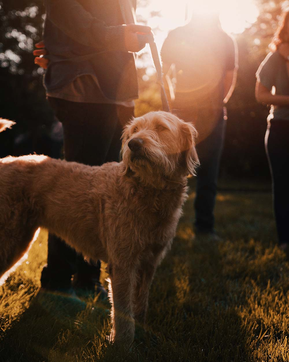 regaldog_breedwise